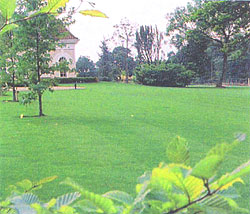 Photograph of a lawn
